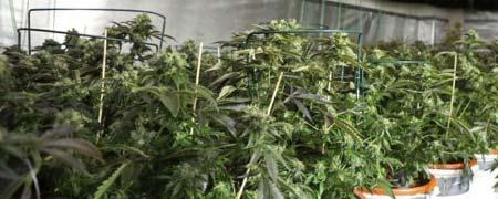 wietplantage ontruimen